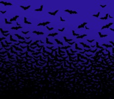 Home Invasions – a handy guide to bats in the attic